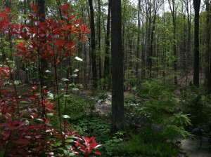 The back woods reflect mostly greenish hues.