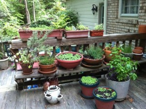 Herbs can be grown in pots -- a pretty collection!
