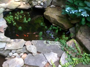 Fish Pond with Happy Fish!  (Photo Credit: Adroit Ideals)