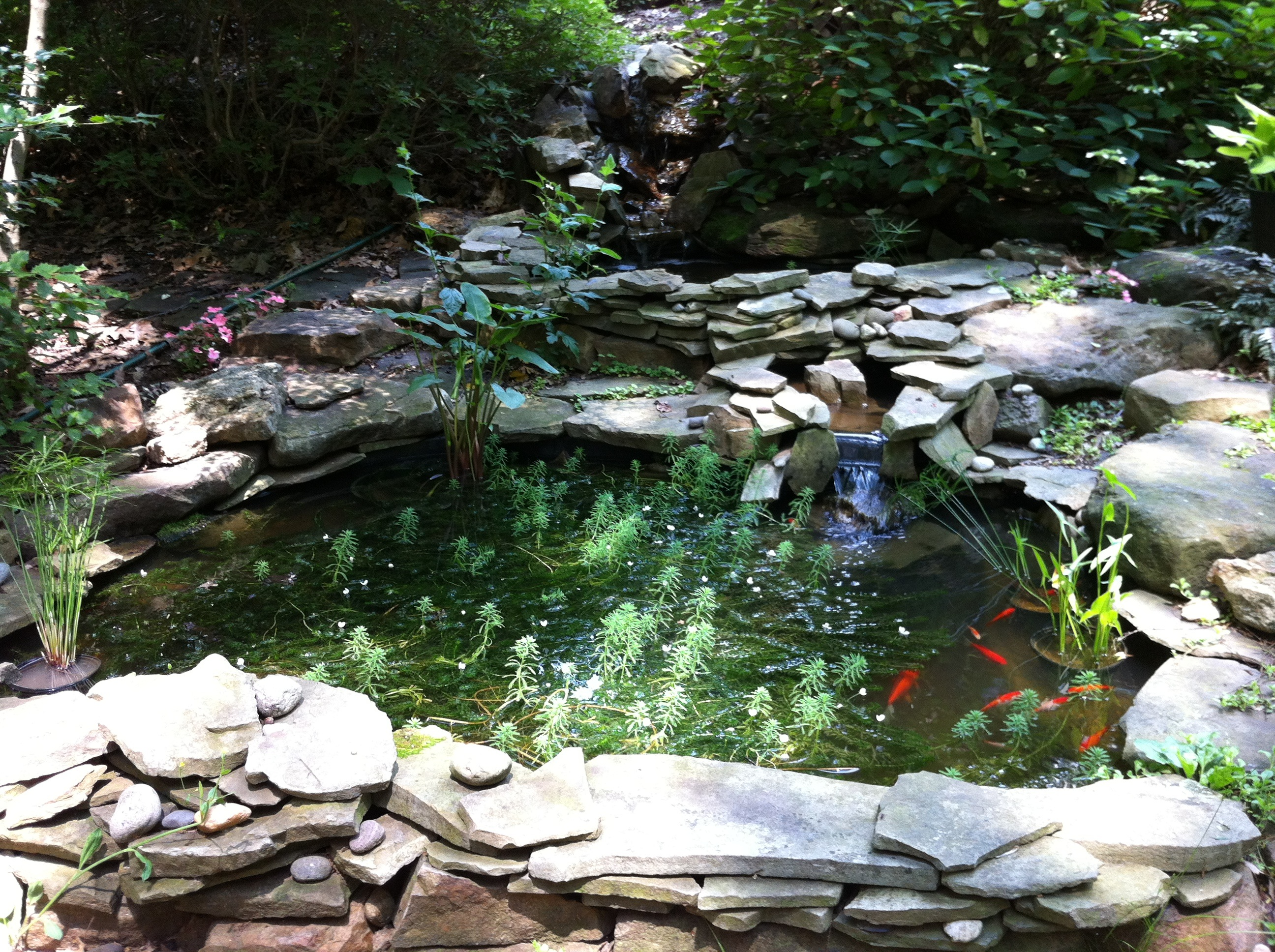 Garden projects a gardener 39 s delight for The backyard pond