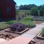 KitchenGardenatBarboursvilleVineyard