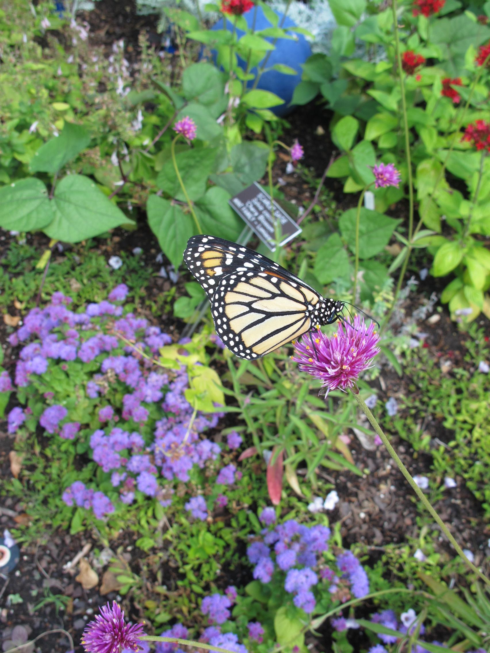 Butterfly release 6_23_12 032