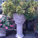 Add height to your garden with a tall container