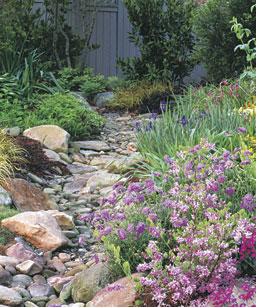 dry creek bed A Gardeners Delight