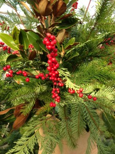 Festive Greenery and Berries at Merrifield Garden Center