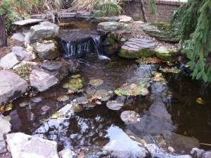 Boulders and evergreens at the pond will provide winter interest (Photo Credit: Adroit Ideals)