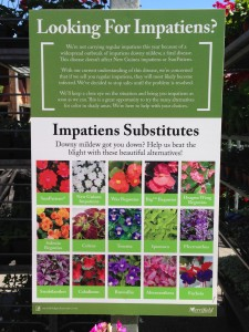 Merrifield Garden Center in Fairfax, VA, has posted these impatiens replacements or substitutes (Photo Credit: Adroit Ideals)