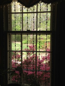 Pink azaleas in full Spring bloom outside of my living room window (Photo Credit: Adroit Ideals)
