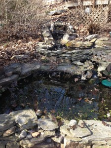 The Spring pond after cleanup!  Plastic protective pond netting will be removed in early May. (Photo Credit: Adroit Ideals)