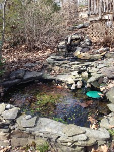 The Spring pond is full of algae, leaves, and other debris.  (Photo Credit: Adroit Ideals)