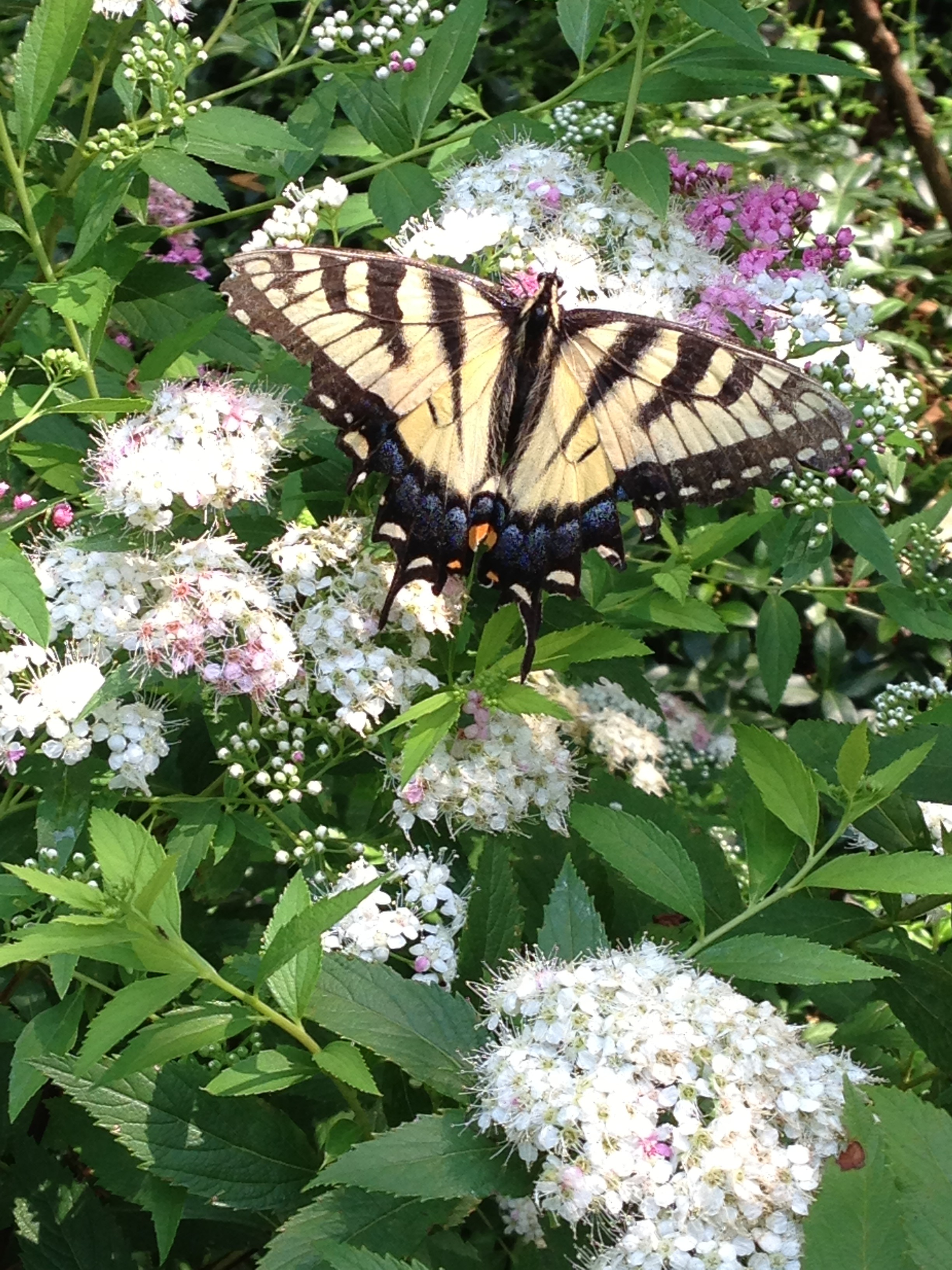 How to Design a Butterfly Garden - A Gardener\u0027s Delight