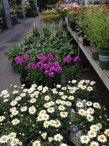 A selection of flowering plants for a Butterfly Garden at Merrifield Garden Center (Photo Credit: Adroit Ideals)