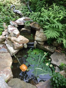 A view of my front pond.  The turtle is ceramic!  (Photo Credit: Adroit Ideals)