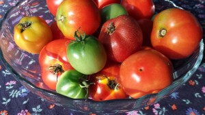 Some of this season's patio tomato harvest from my deck!  (Photo Credit: Adroit Ideals)