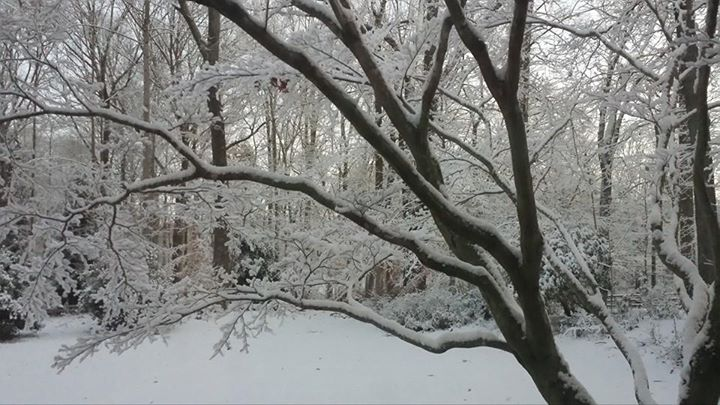 The view through our front Bloodgood maple tree on a snowy day (Photo Credit: Adroit Ideals)