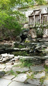 Two of my back yard ponds from The Ponds Project