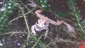 A curious frog comes closer