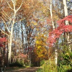 Fall color at the entrance to our driveway