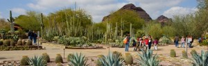 Photo Courtesy Desert Botanical Garden, Phoenix, AZ