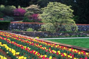Colorful tulip bed at Biltmore Estate (Photo Credit: visitnc.com)