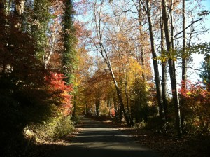 Fall Drive in Virginia (Photo Credit: Adroit Ideals)