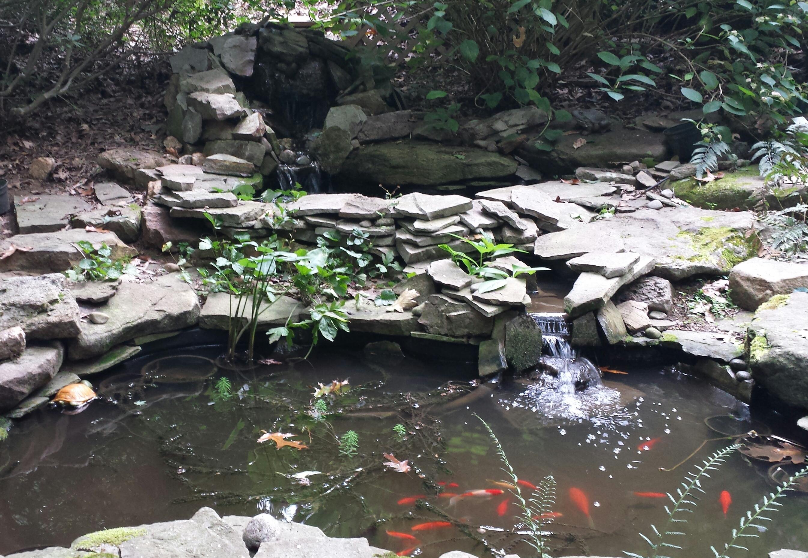 My backyard ponds