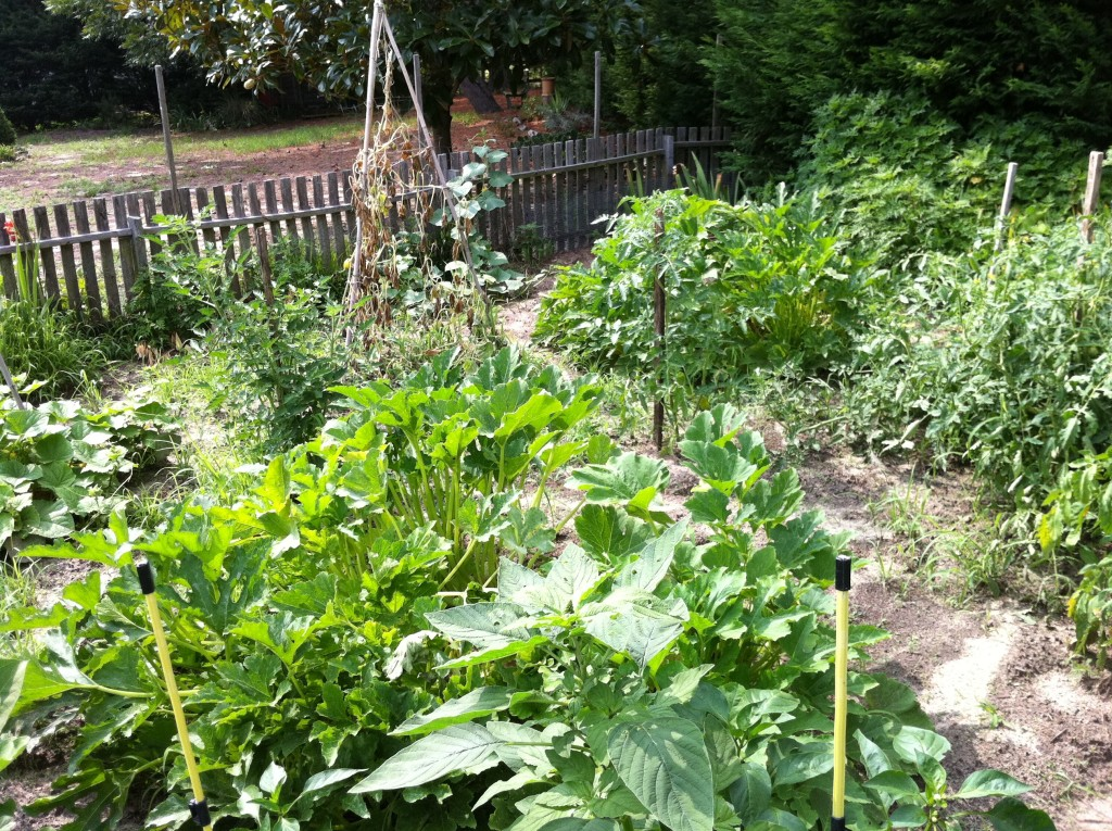 My late father-in-law's vegetable garden