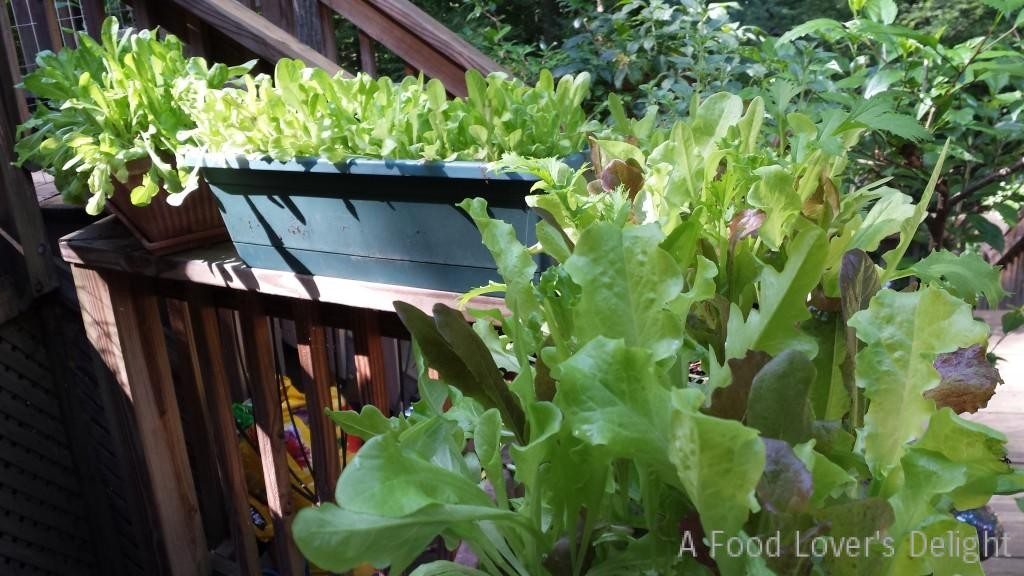 Baby lettuces did wonderfully in pots on my deck railing this year (no slugs either!)