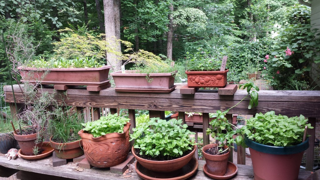 My potted herb and salad garden!
