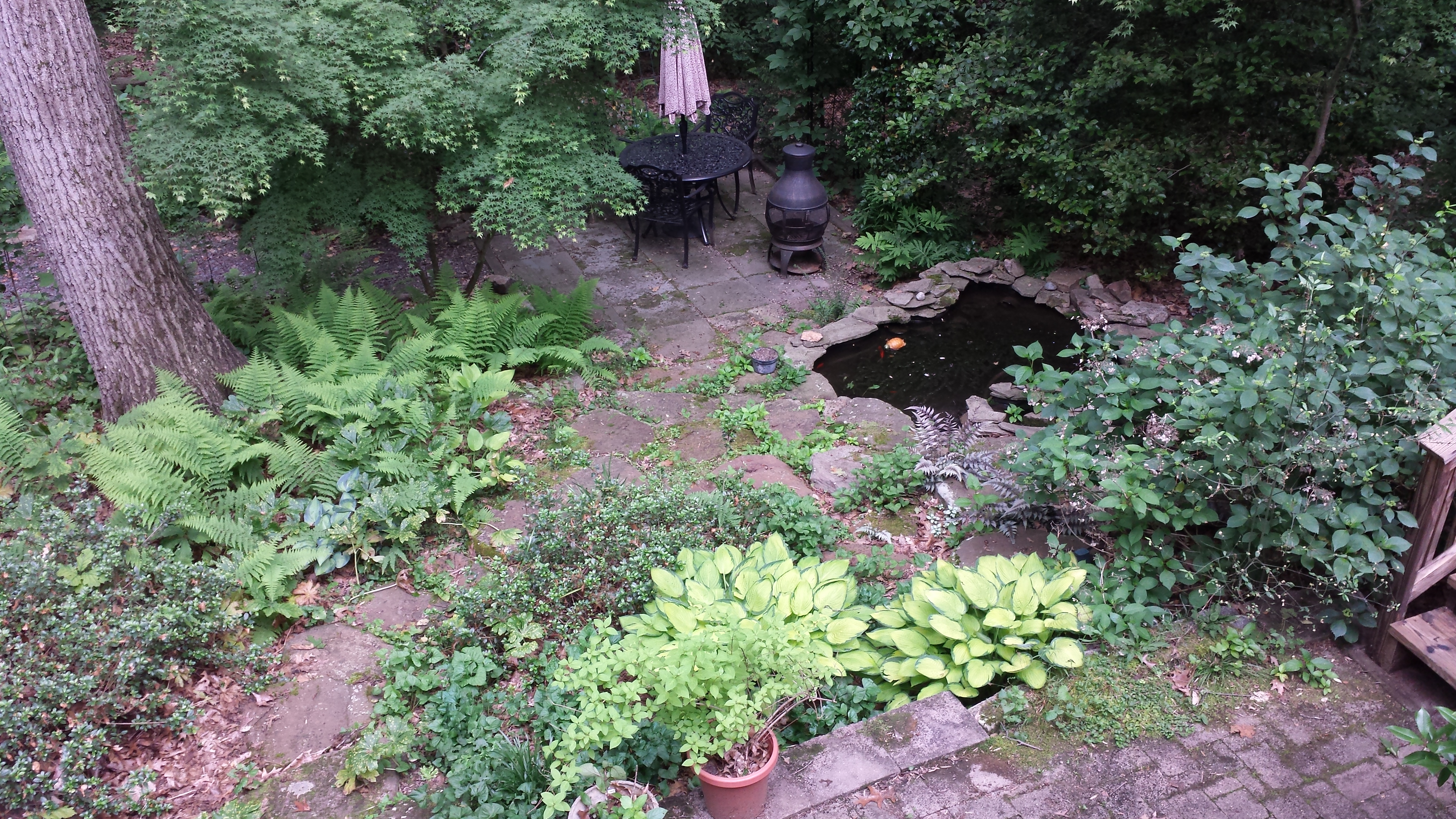 A view from the deck to the backyard ponds -- Lady in Red hydrangea is blocking the view of the top pond