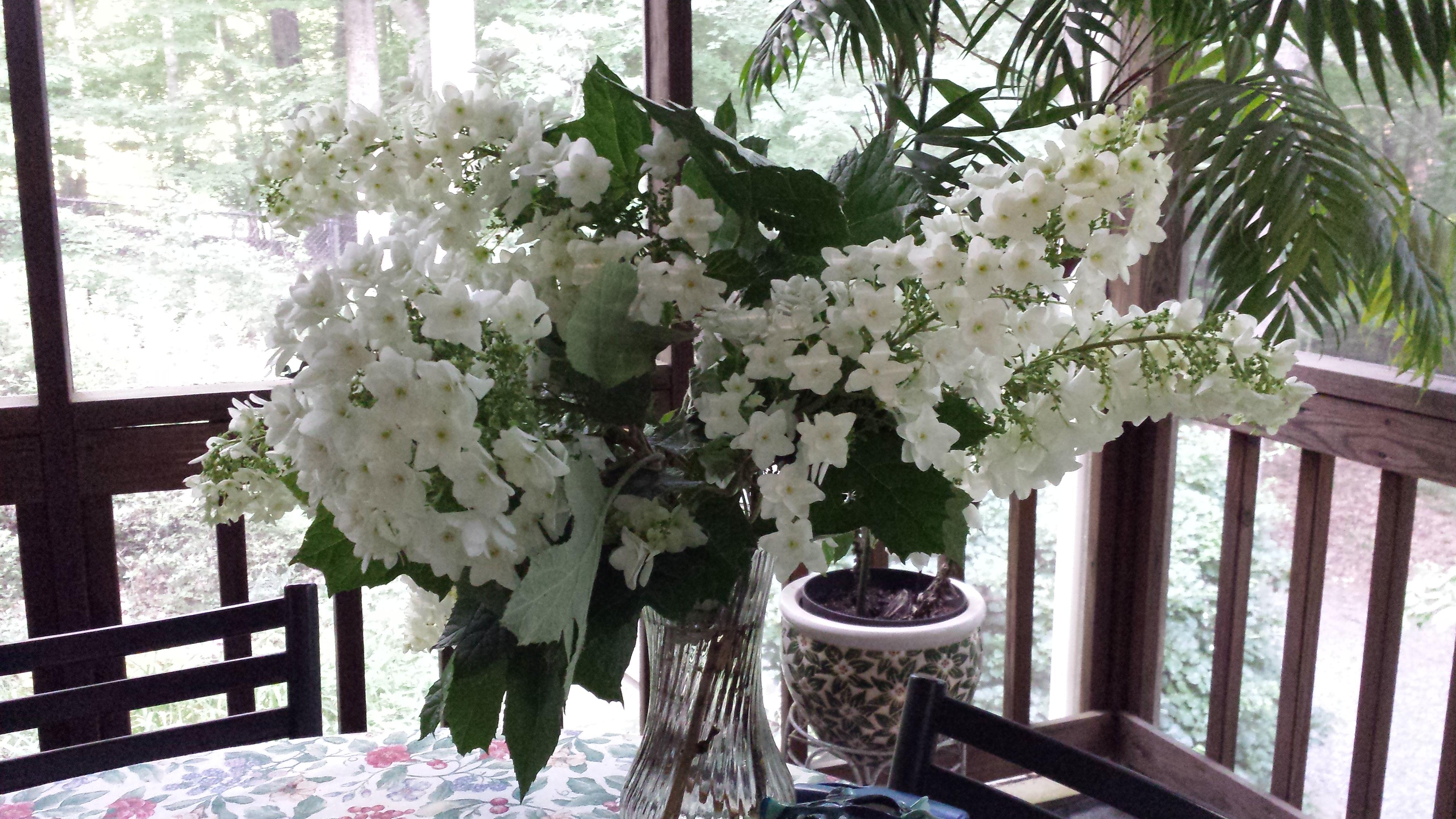 Massive oakleaf hydrangea blossoms make a gorgeous cut flower arrangement