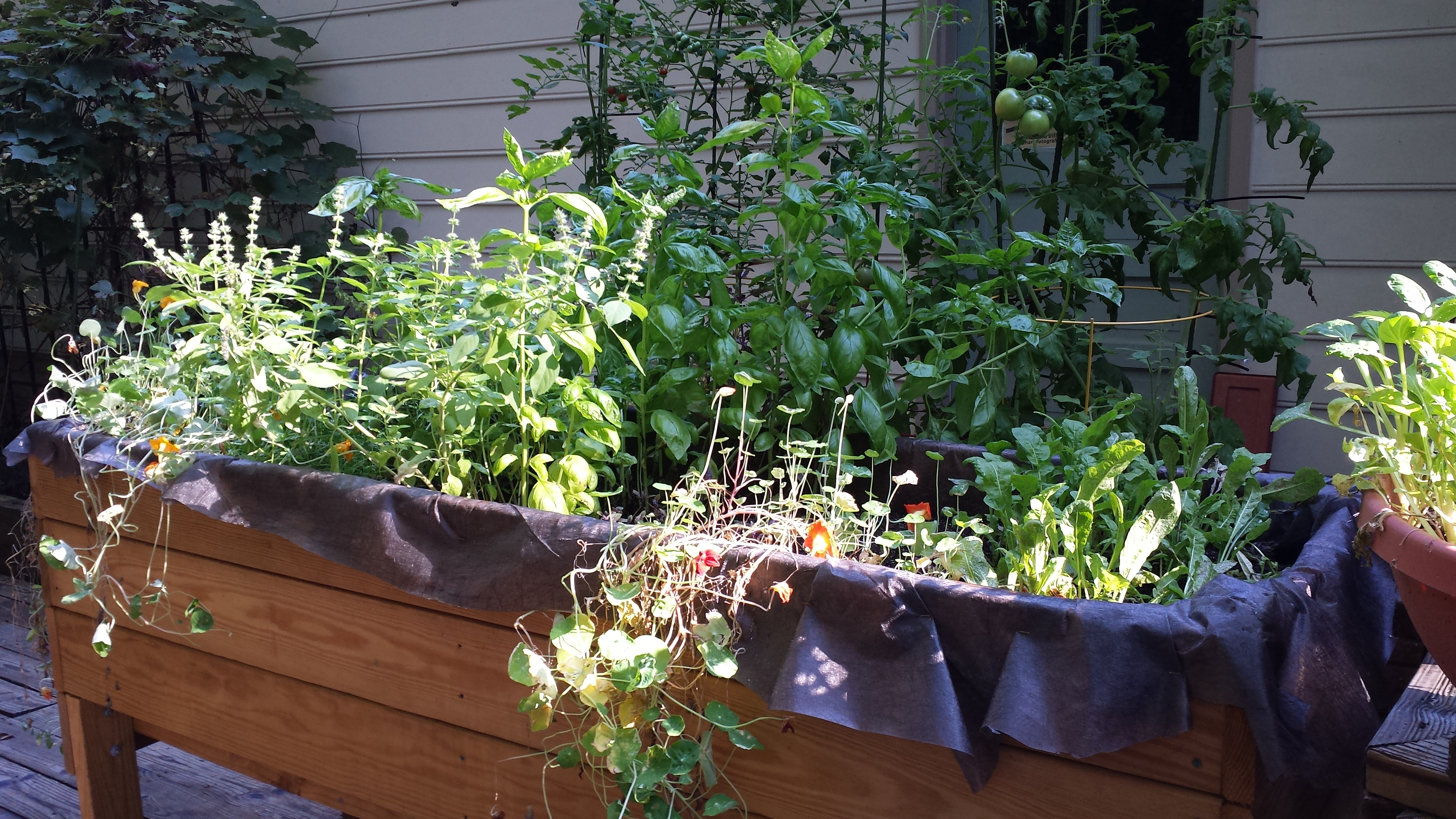 The basil is overtaking the raised planter bed