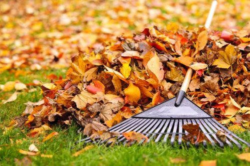 Raking is good for you
