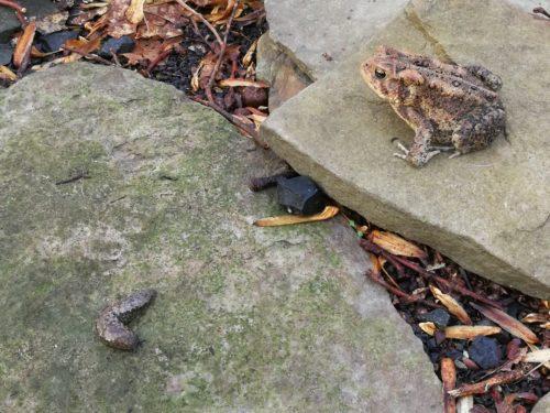 A toad looks at a slug