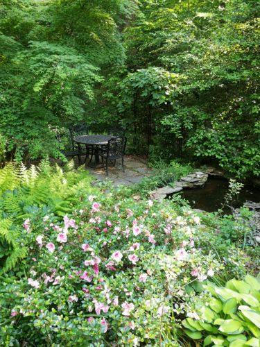 Azaleas, ferns, hostas by the ponds