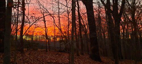 Pink Orange Sunrise