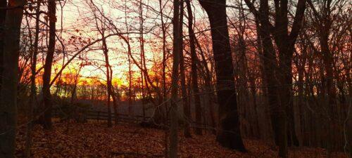 Yellow Orange Sunrise
