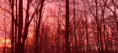 Reddish Sunrise