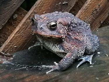 Super cute toad
